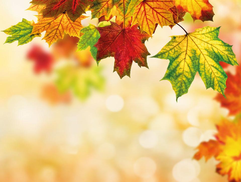 Welkom Herfst Weekend